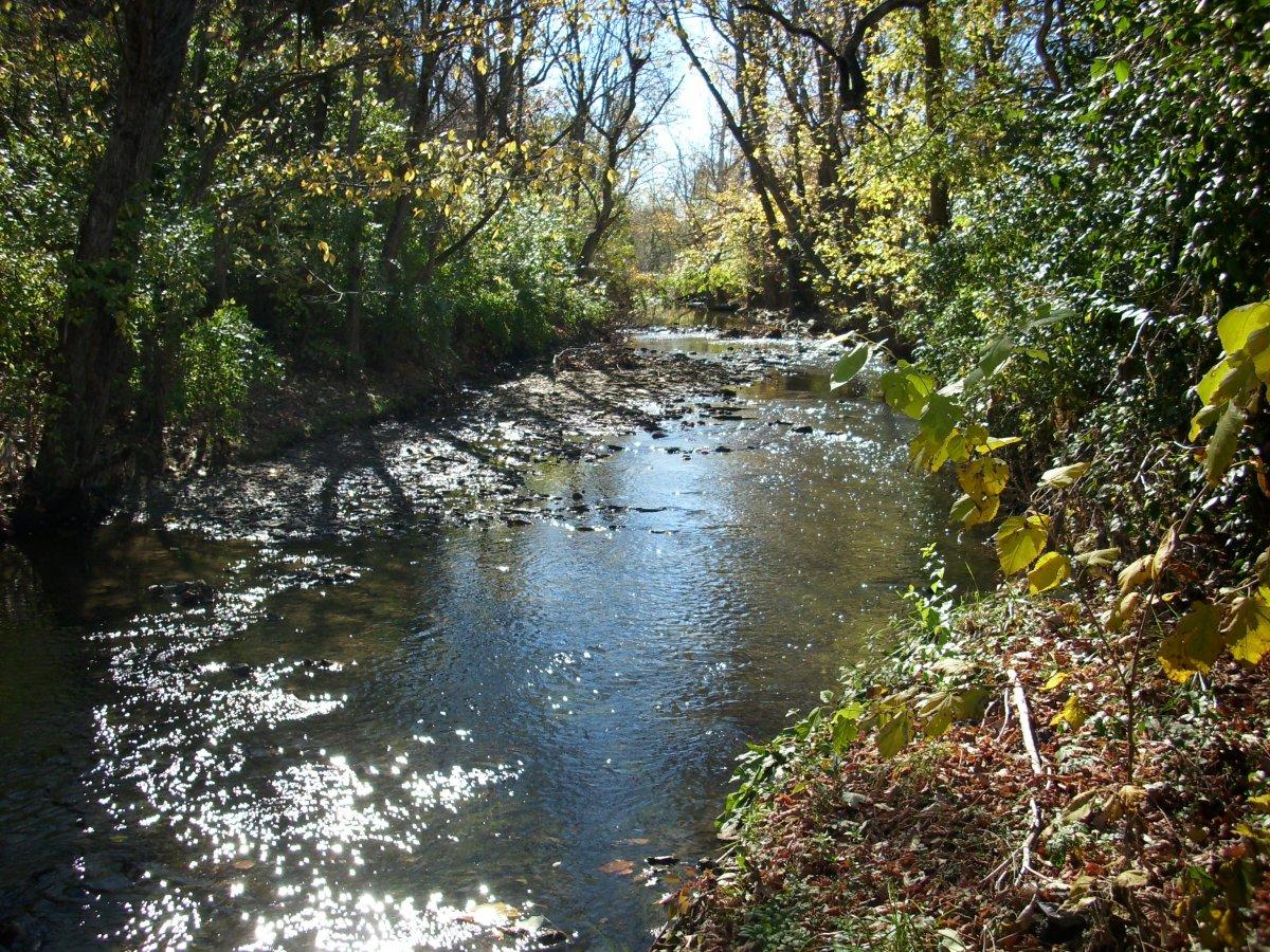 Dreaming Creek.jpg